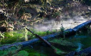 Hall of Mosses, Forks, Washington