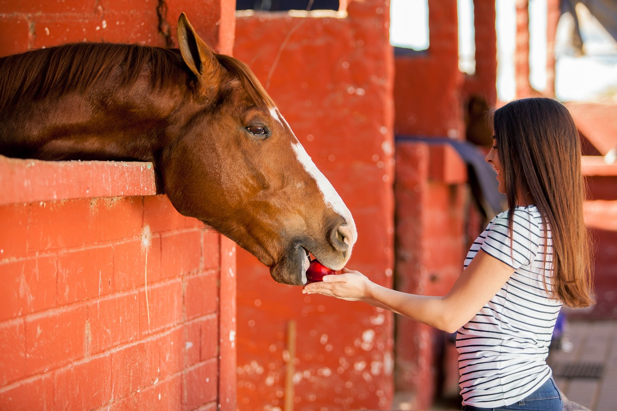 woman giving apple to horse