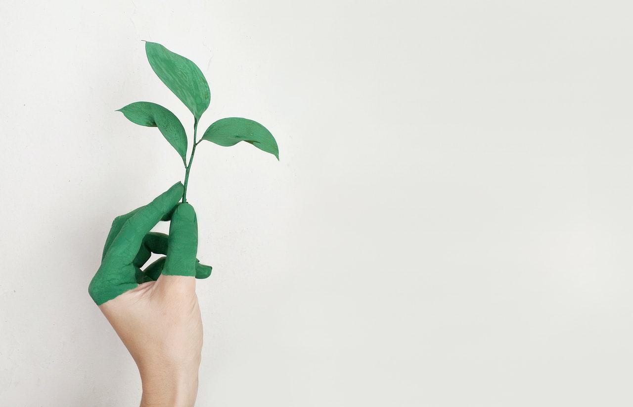 hand holding plant